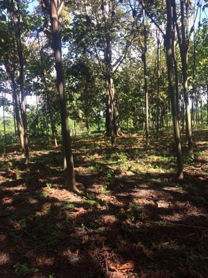 Riverfront Property For Sale in balzar