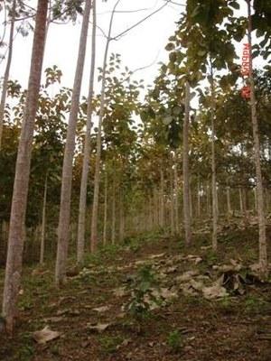 Hacienda de maderas finas rentabilice su inversion en - Maderas moral ...