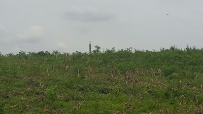 Countryside Agricultural Land/Farm For Sale in Vinces