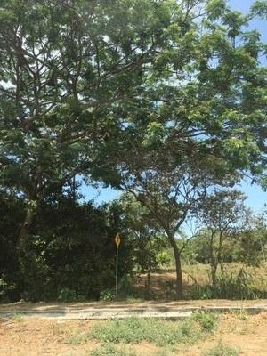 Finca Vía a la Costa - Guayaquil.jpg