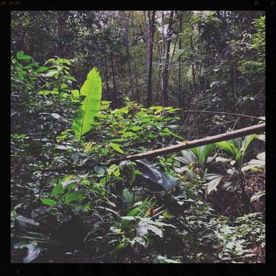 350 ACRES of oceanview, coastal jungle forest