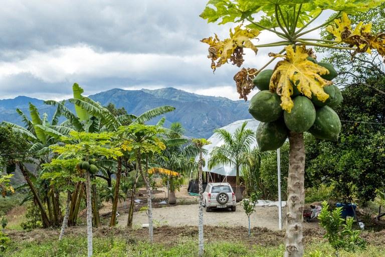 Organic Farm on 8 Hectares