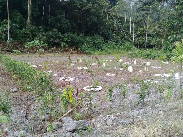 Countryside Home Construction Site For Sale in La Troncal