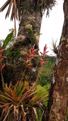 orchids ecuador.JPEG