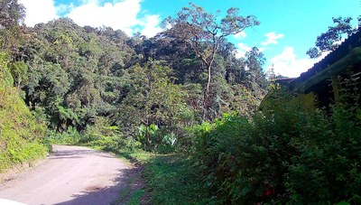 amazon roads.jpg