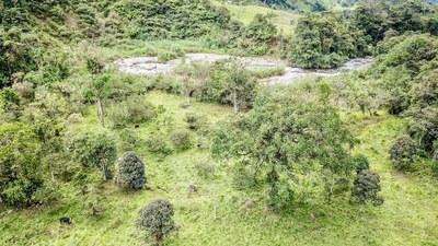 cows in ecuador.jpg