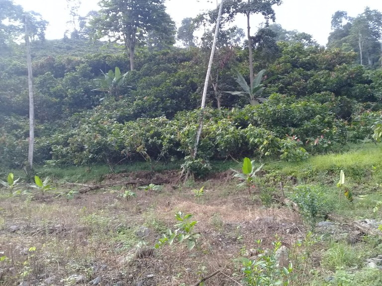 Riverfront Development Parcel For Sale in Cochancay