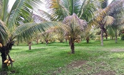 28a Part of coconut grove.jpg
