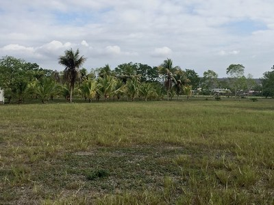 29 Part of the back part of property looking to ward the coconut field.jpg