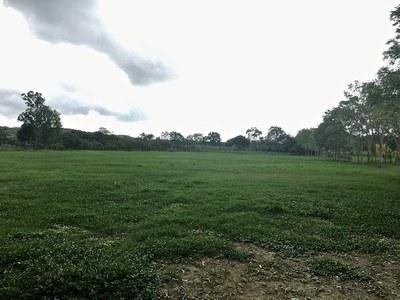 30 Open field.jpg