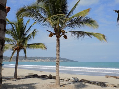 cbv palms.png